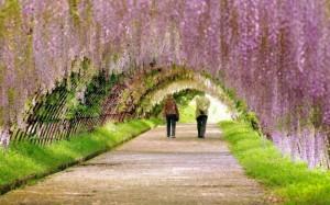 la-primavera-e-arrivata-primavera
