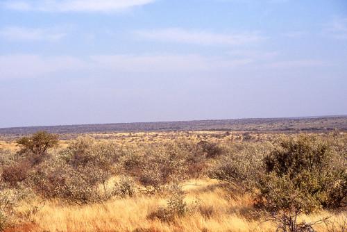 1024px-African.landscape