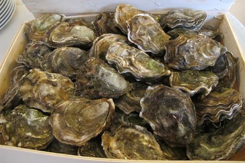 Ostriche-cibo-afrodisiaco-fin-dai-romani-Meglio-consumarle-nei-mesi-con-le-erre-1