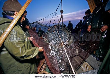 rete-a-circuizione-barca-da-pesca-salpamento-in-net-pieno-di-sardine-sardina-sp-agadir-marocco-oceano-atlantico-w7wytb